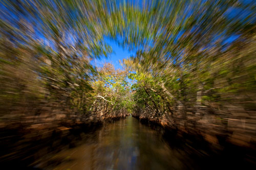 Speeding through the mangroves near Everglades City.