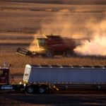 Dust kicked up by a combine in late day light as corn is harvested.