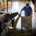Jeff Wunrow works on an afternoon feeding at his farm near Potter, Wisconsin.