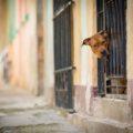 2864 Cuba Street Photography
